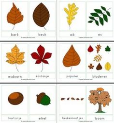 Woordkaarten Herfst met namen bomen Autumn Art, Autumn Theme, Autumn Leaves, Tree Study, Autumn Activities For Kids, School Readiness, Hello Autumn, Creative Kids, Preschool Crafts