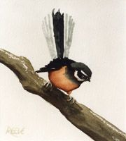 More fantail Watercolor, Image, Painting, Art, Color