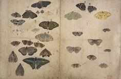 Maruyama Okyo - Album of Sketches-butterfly03