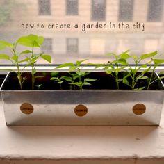 DIY Home Grown Peppers