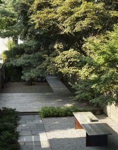 Japanese maple trees in Brooklyn by Matthew Wiliams