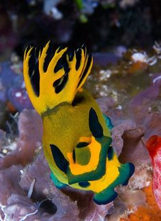 New Week Nudibranch: Tambja olivaria Underwater Sea, Underwater Creatures, Ocean Creatures, Beautiful Sea Creatures, Animals Beautiful, Life Under The Sea, Sea Snail, Sea Slug, Sea And Ocean