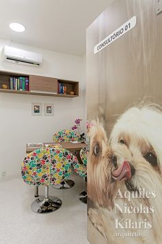 Posh pooch pet salon boutique in woodbury mn puppies grooming your french bulldog solutioingenieria Choice Image