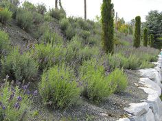 Permaculture Garden, Nature, Plants, Travel, Image, Studio, Google, Naturaleza, Viajes