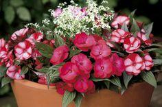 Výsadby na slnko i do tieňa   Kvety a Záhrada