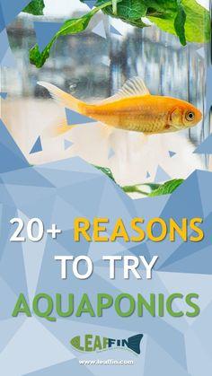 Reasons to try Aquaponics