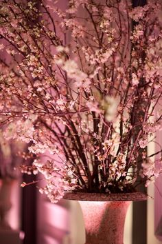 Cherry blossoms and pink uplighting.