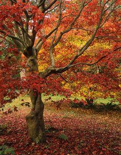 Winkworth Arboretum – Stunning Autumn Colors   National Trust   Surrey, UK
