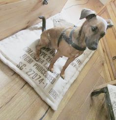 Sack-Hundekissen