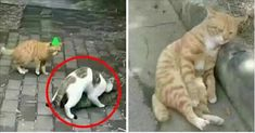 Poor ginger...she  broke his heart - THIS IS THE MOST HEARTBREAKING STORY EVER! THIS CAT'S WIFE BROKE HIS HEART...