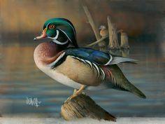-Wood-Duck.