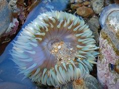 visit tidal pools and do a trip up the California coast