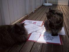 Killarna visar att de har var sin bild av våra populära bordstabletter.