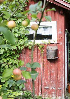 Punavuoresta mummonmökkiin! Punaisessa tuvassa asuu Janne ja seitsenvarpainen kissa | Meillä kotona
