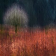 Outstanding Intentional Camera Movement Images :: Digital Photo Secrets