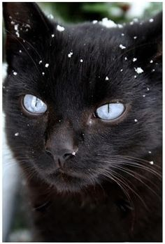 5 Amazing kittens with blue eyes ~ The Pet's Planet