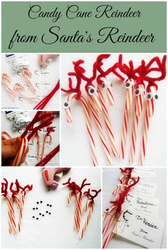 Candy Cane Reindeer with Reindeer Tags   More Reindeer Treats