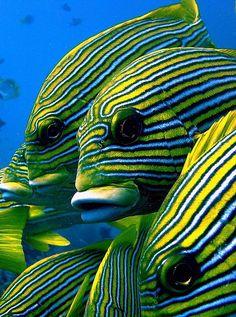 underwater world ocean life colourful beautiful Underwater Creatures, Underwater Life, Ocean Creatures, Colorful Fish, Tropical Fish, Beautiful Creatures, Animals Beautiful, Fauna Marina, Life Under The Sea