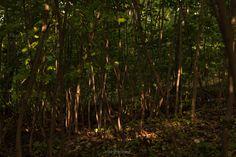 Bajando de la Ciutatella, extrañamente llamado igual que el parque en Barcelona. Nos tocó esa hermosa luz del atardecer, que además se colaba entre las ramas y el follaje de los árboles en el camino de bajada. Creo que tomé más fotos aquí que en la ciudad en sí...