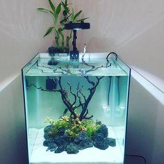 New Island tank setup video is live! Can you guess whats goin in it? Betta Aquarium, Aquarium Terrarium, Nature Aquarium, Home Aquarium, Aquarium Design, Planted Aquarium, Aquarium Garden, Aquarium Aquascape, Mini Aquarium