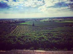 """La terra del mio amato Prosecco ❤️🍾🙌🏻 #conegliano #veneto #wine #igersitalia #prosecco  #igersveneto #love  #uva #summer #vino#nature  #sky #sun  #beautiful #pretty  #blue #flowers #tree #twilight #clouds #beauty #light #cloudporn #photooftheday  #green #skylovers #dusk  #iphonesia #mothernature  #landscape"" by @donatellapiva. #capture #pictures #pic #exposure #photos #snapshot #picture #composition #pics #moment #focus #all_shots #color #foto #photograph #fotografia #photographyeveryday…"