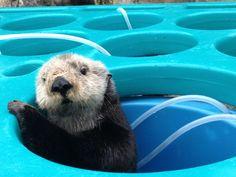 Monterey Bay Aquarium, Memories of Mae