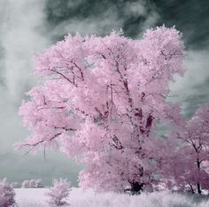 pretty in pink Beautiful World, Beautiful Places, Magical Tree, I Believe In Pink, Pink Trees, Pink Cotton Candy, Pink Clouds, Naturally Beautiful, Flower Photos
