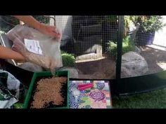 Making wheatgrass - Tarwegras zaaien - YouTube