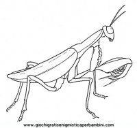 disegni_da_colorare_animali/insetto_insetti/insetti_b9691.JPG