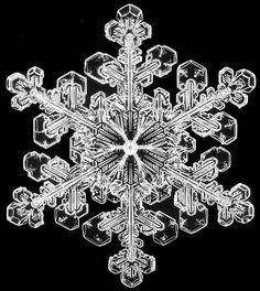 Schnee1.jpg (446×499)