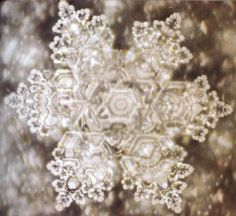 Dr. Masaru Emoto water healing Message and The Process of Ho'oponopono - anacoana's Blog - Blogster