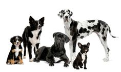 What's Your Dog Breed IQ? (Quiz)
