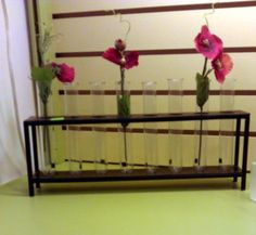 test tube vases at The Bug Store