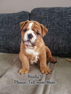 Baggy Bulldogs (BaggyBulldogs) on Twitter