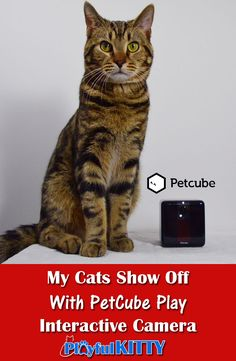 Do you miss your cats when you're away from home? Me too. Check out our review of the @PetCube Play camer!  #cats #ad