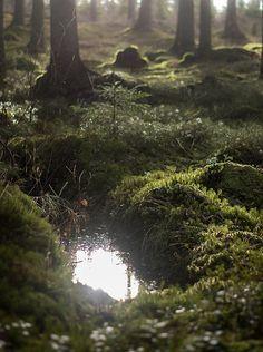 Forest Reflection by Magnus Dovlind