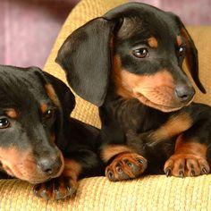 Love my weenie dogs!