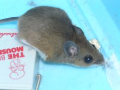 Mice can infest any home. They are found in barns or solitary houses in rural areas, and they also thrive in apartments or buildings in big cities. Oftentimes, residents don't even notice that they have mice in their homes,