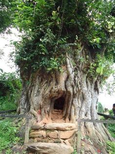 a temple inside a tree in Nepal Weird Trees, Tree Story, Storybook Homes, In Natura, Bare Tree, Unique Trees, Unusual Plants, Tree Trunks, Tree Sculpture