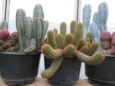 Cactus | 個性仙人掌