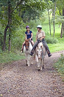 New River Trail State Park offers seasonal trail rides from the park's livery service Autumn Lake, Autumn Scenery, Lakeside Restaurant, Camp Trails, Shenandoah River, Hiking In Virginia, Summer Jobs, River Trail, New River
