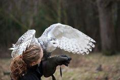 I really want to take up falconry.