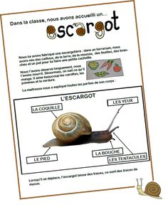 Elevage d'escargots                                                                                                                                                                                 Plus Grande Section, Worksheets For Kids, Summer Crafts, Terrarium, Homeschool, Language, Classroom, Activities, Education