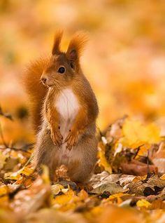 beautiful-wildlife:  SquirrelbyRobert Adamec