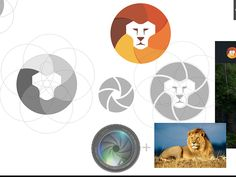 Dribbble - Logo Concept Lenses + Lion by Yoga Perdana