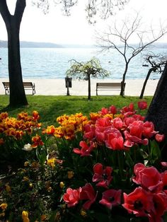 Beykoz,İstanbul,Turkey Bosphorus Bridge, Foto Blog, Istanbul Travel, Hagia Sophia, Exotic Places, Turkey Travel, Dream City, Famous Places, Istanbul Turkey