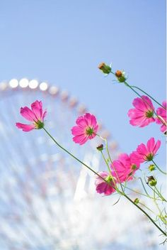 Festivals and Flowers... :)