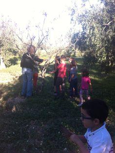 Libro Tattile-sonoro | II Lab di Campagna delle Meraviglie. Tra gli alberi a caccia di suoni e colori.