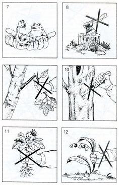 Правила поведение в лесу раскраска