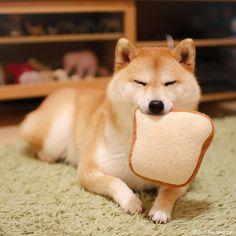 厚切りだいふく耳も残さず食べてよね❤️ Can I put the same kind of breads in the same bag? #ブログも更新したよ